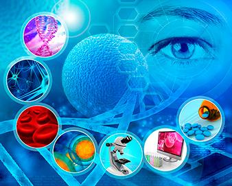Top Performance – vor allem eine Folge kräftiger Mitochondrien